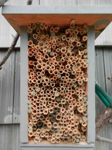 The first version of the mason bee house.  Only one problem, where do you place the cocoons when they are ready to be released. Next years version soved that one.