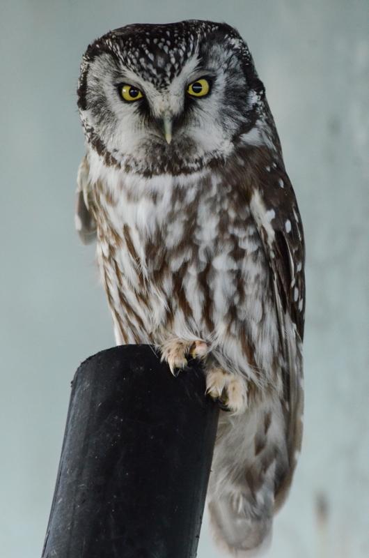 owl-eyes-wide