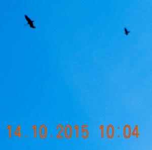 2015-craneandraven
