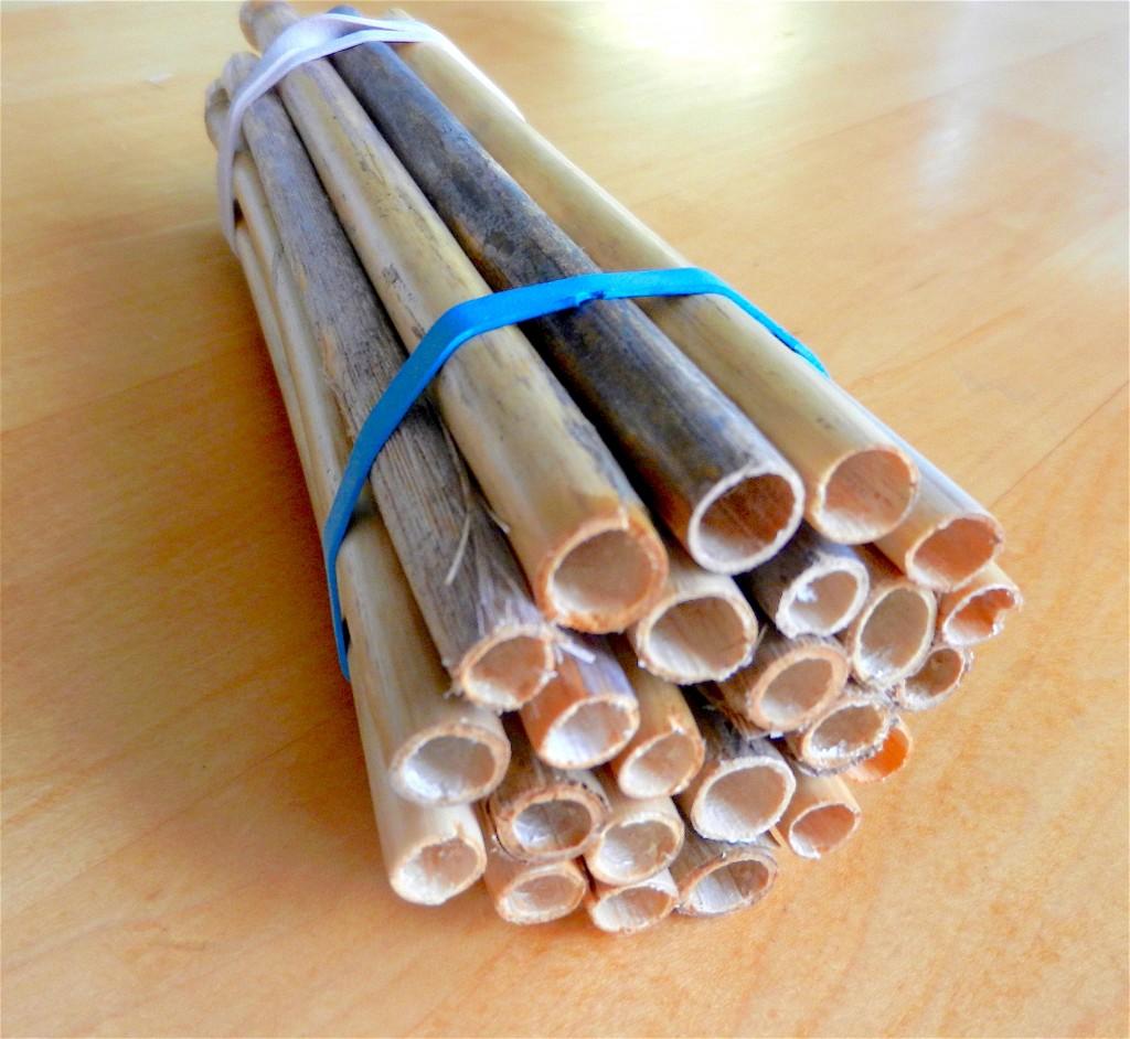 phragmites tubes for mason bees